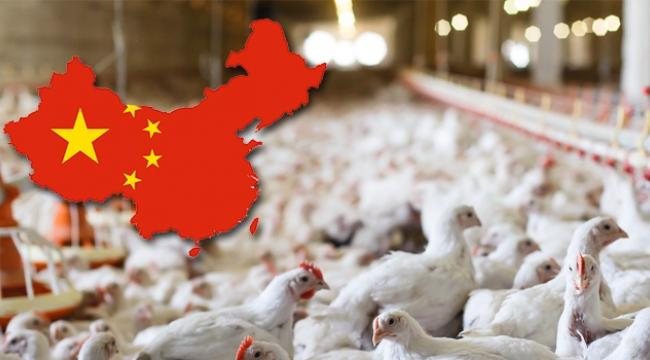 Türkiye'nin Kanatlı Sektörü Çin ile Uçacak