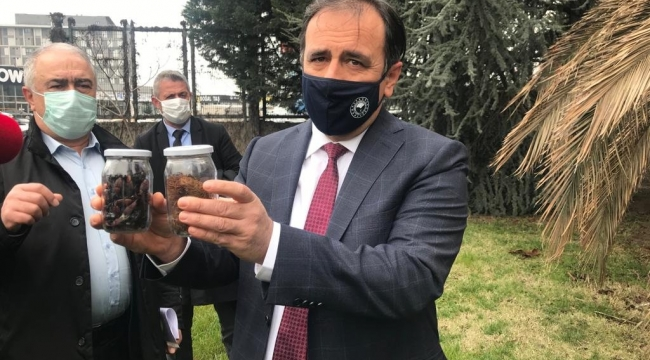 İstanbul'da 1500 palmiye ağacı imha edildi