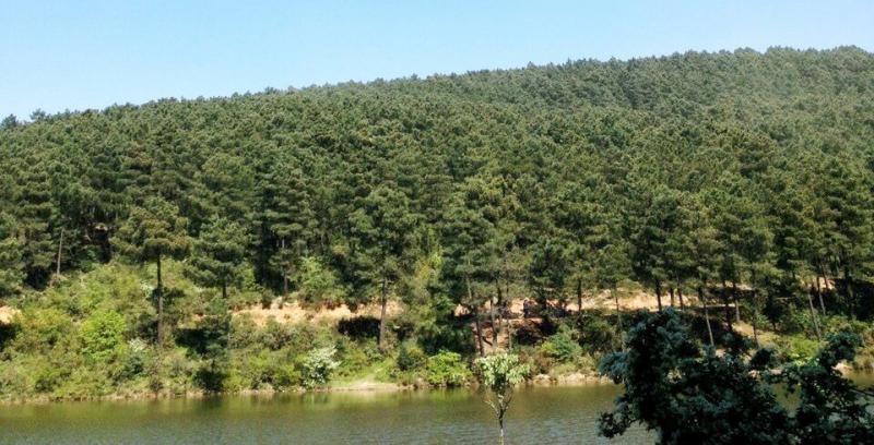 Aydos Ormanları Hakkında İddia