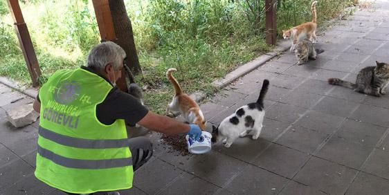 Sokak Hayvanları Onlara Emanet